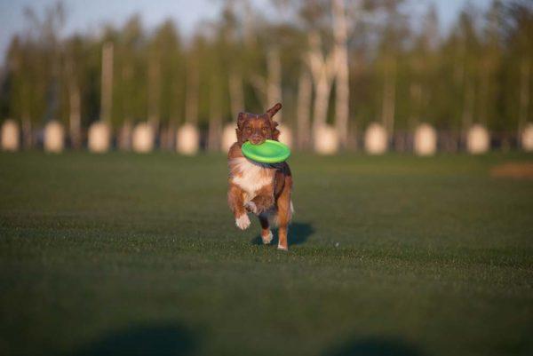 FLYBER - De beste Honden Frisbee!-1256