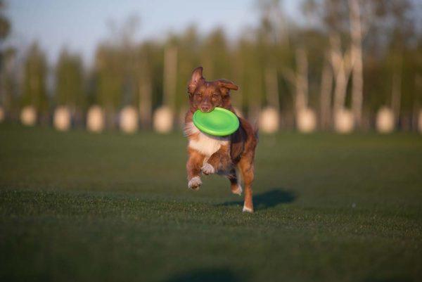 FLYBER - De beste Honden Frisbee!-1255