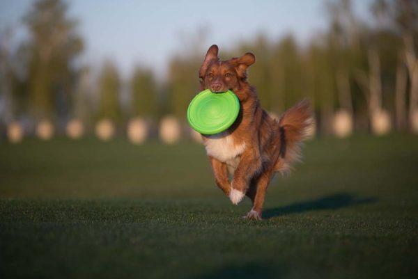 FLYBER - De beste Honden Frisbee!-1258