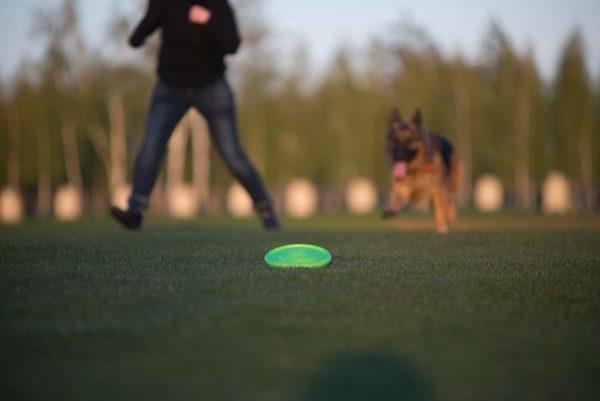 FLYBER - De beste Honden Frisbee!-1257
