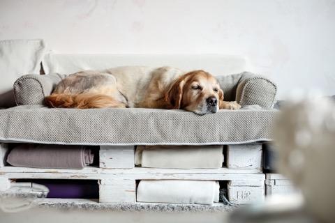 Bolstered Sofa Throw - Hondenbed voor op de bank - Storm-1761