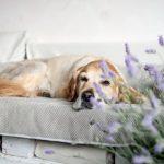 Bolstered Sofa Throw - Hondenbed voor op de bank - Storm-1763