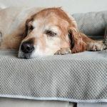 Bolstered Sofa Throw - Hondenbed voor op de bank - Storm-1764
