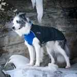 Chilly Dogs - Alpine Blazer - Waterdichte hondenjas - Alle hondenrassen-2414