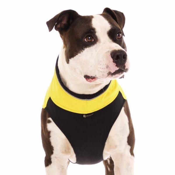 Sofa Dog - Hachico Bull - Waterproof Softshell Body-2491