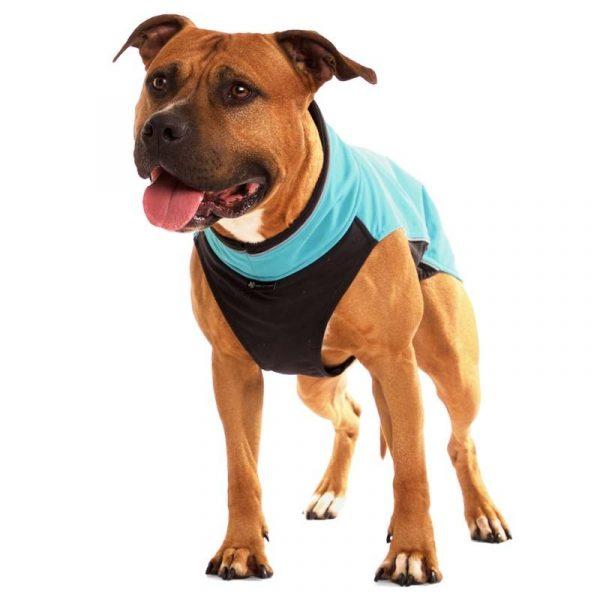 Sofa Dog - Hachico Bull - Waterproof Softshell Body-2486