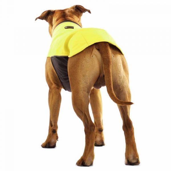 Sofa Dog - Hachico Bull - Waterproof Softshell Body-2488