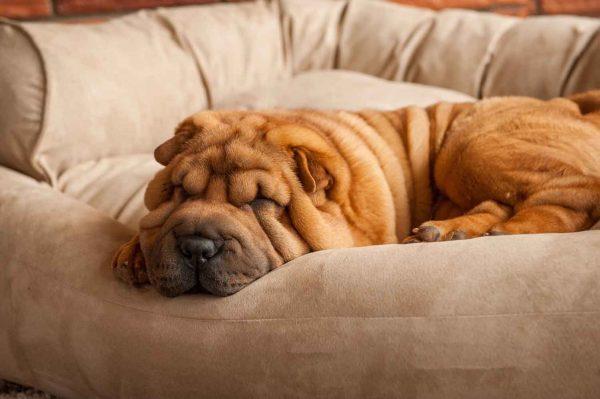 Snoozer Pet Products - Overstuffed Sofa Hondenbed - Buckskin (Luxury)-2768