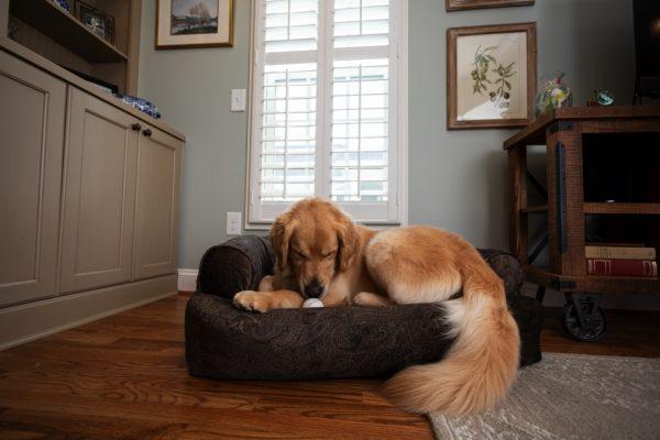 Snoozer Pet Products - Overstuffed Sofa Hondenbed - Laurel Mocha (Show Dog)-2808