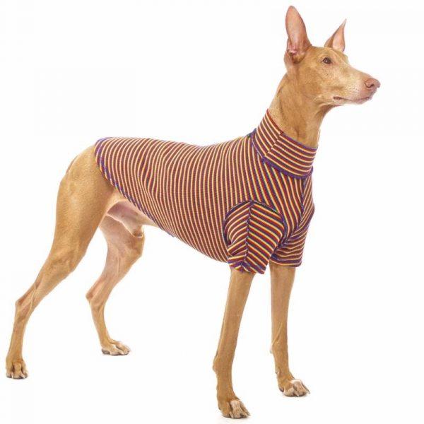 Sofa Dog - Bodie Forte - Onderhemd van stretch katoen-3590